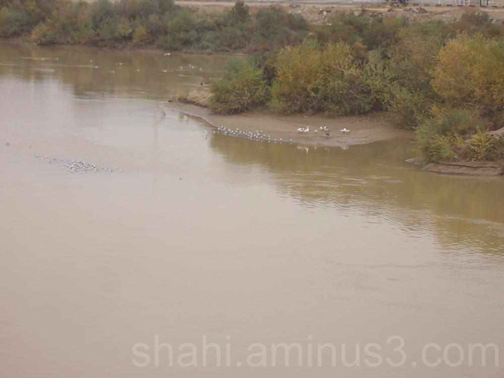 River & Ducks