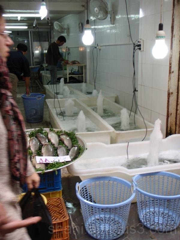 Fish shop3- فروشگاه ماهی