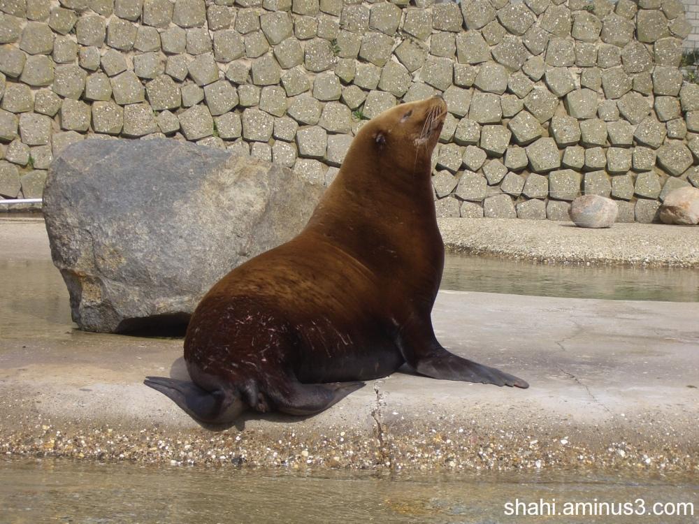 Holand -Pieternburen - ( Seal )