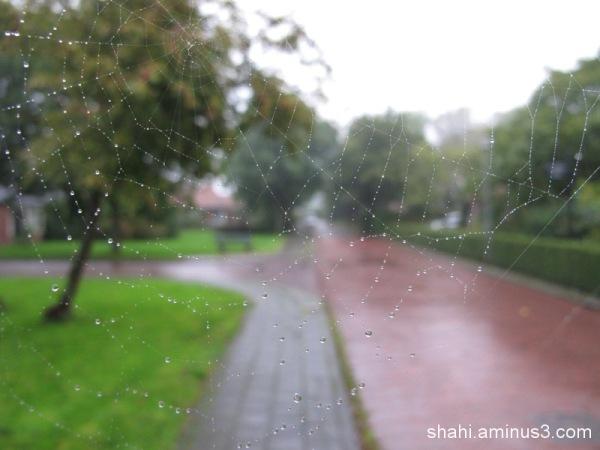 Rain - Life