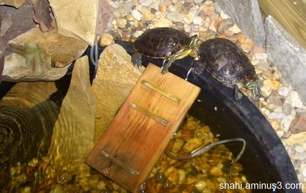 Turtles - لاک پشتها