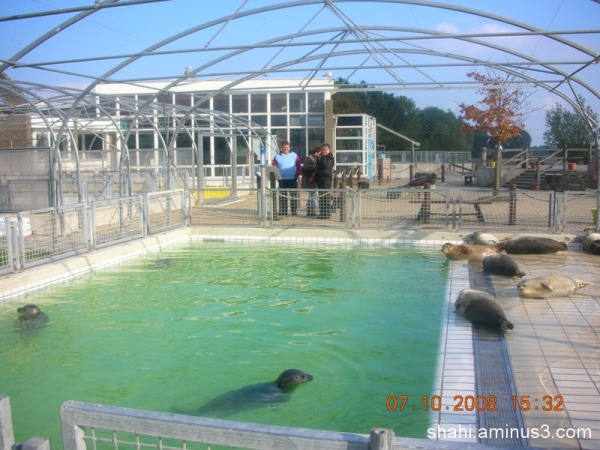 seals care place - محل مراقبت از فوکها