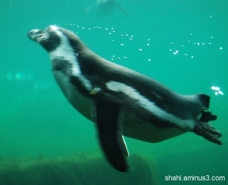 Penguin - پنگوئن3