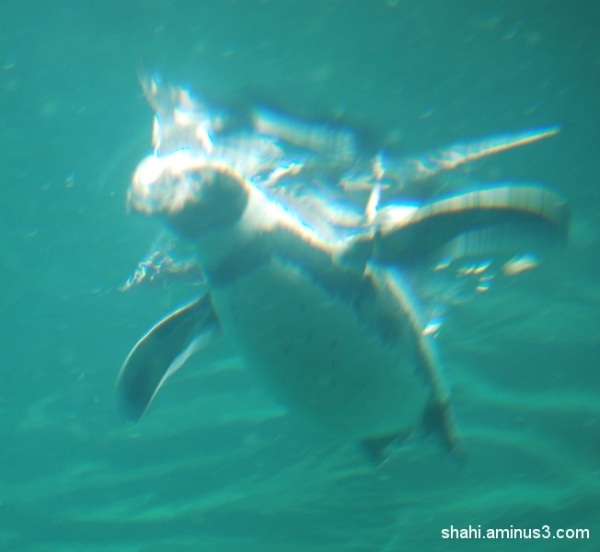 Penguin - پنگوئن5
