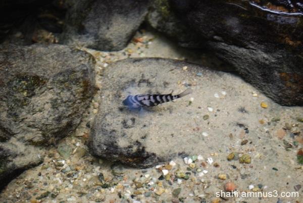 The Little Fish- ماهی کوچولو