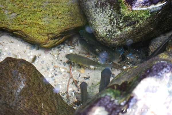 Little Fish- ماهی کوچولو2