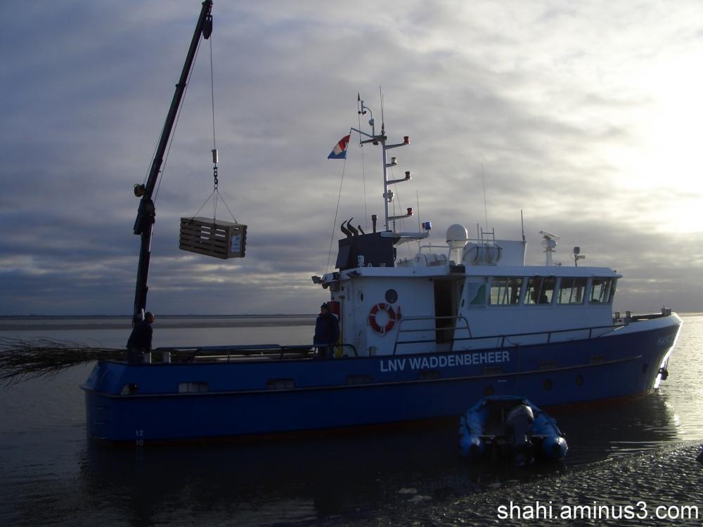 Transport of seal - حمل ونقل فوکها