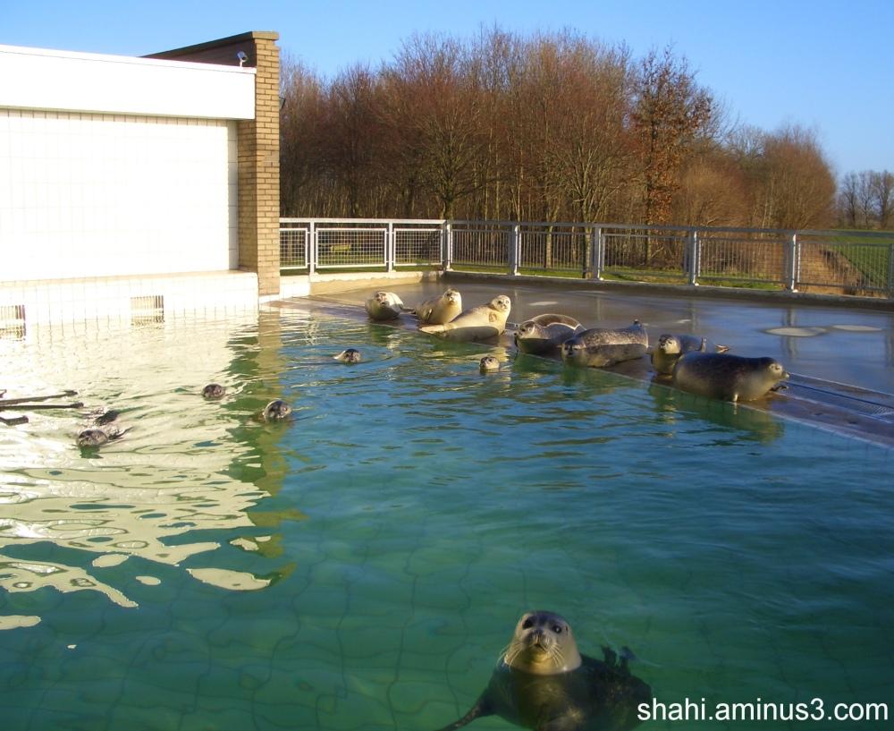 Netherlands - Place seals Care- محل مراقبت از فوک