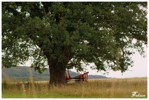 Sous l' arbre