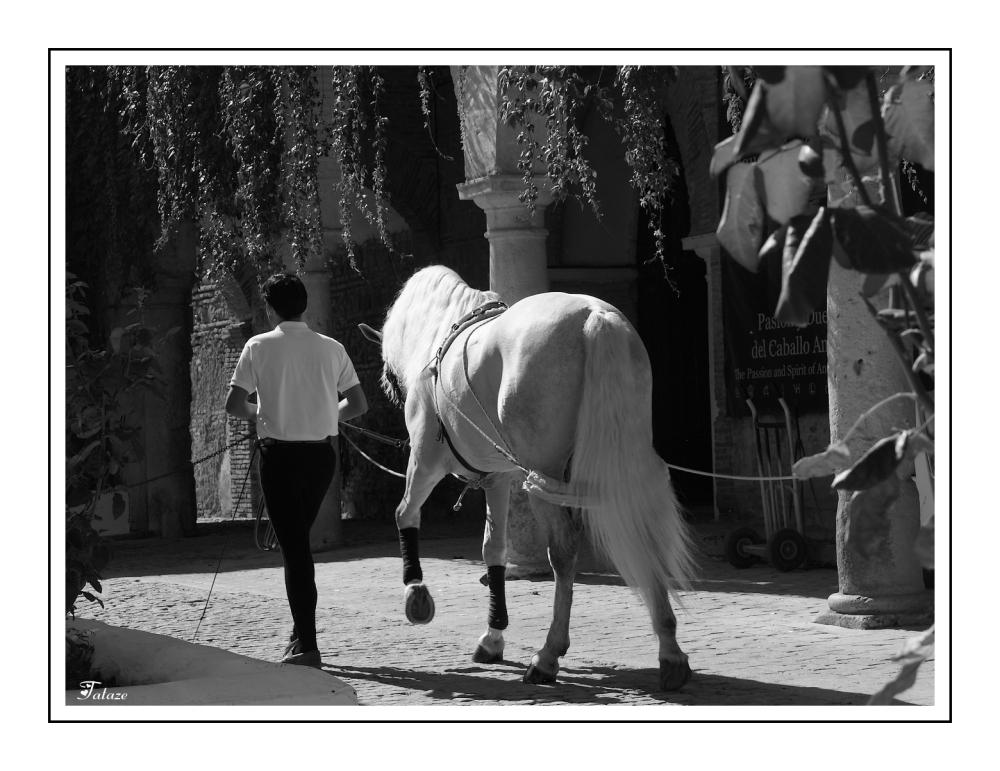 L'homme et son cheval