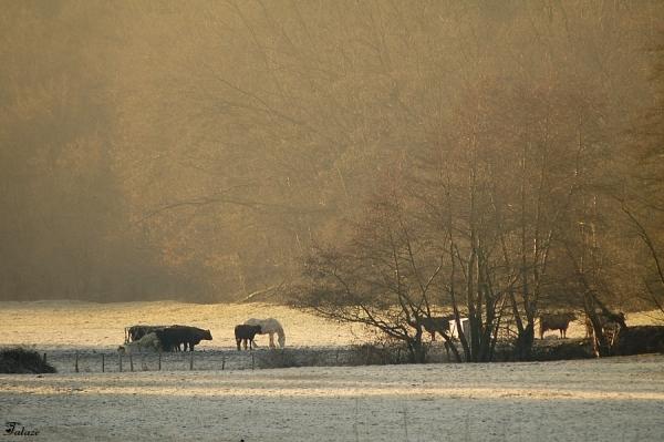 Le troupeau se réveille