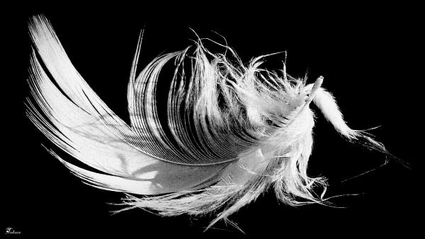 La légèreté de la plume