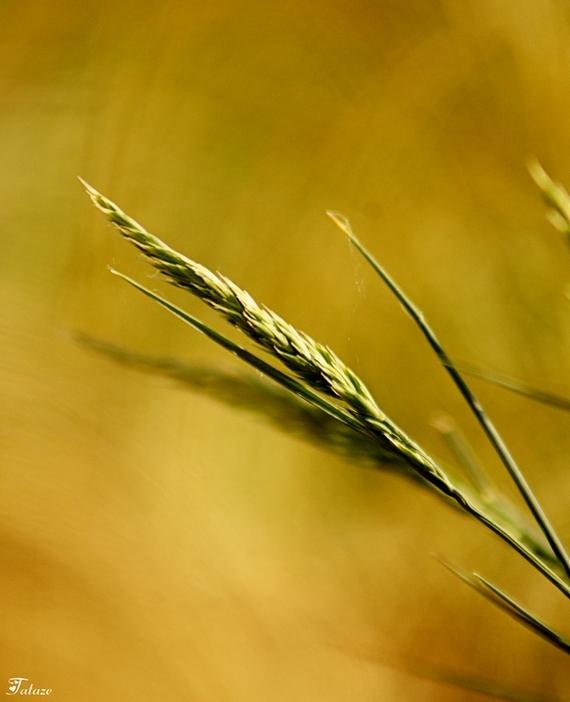 Dans la lumière du soir, des graines en promesses.