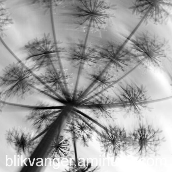 blikvanger146