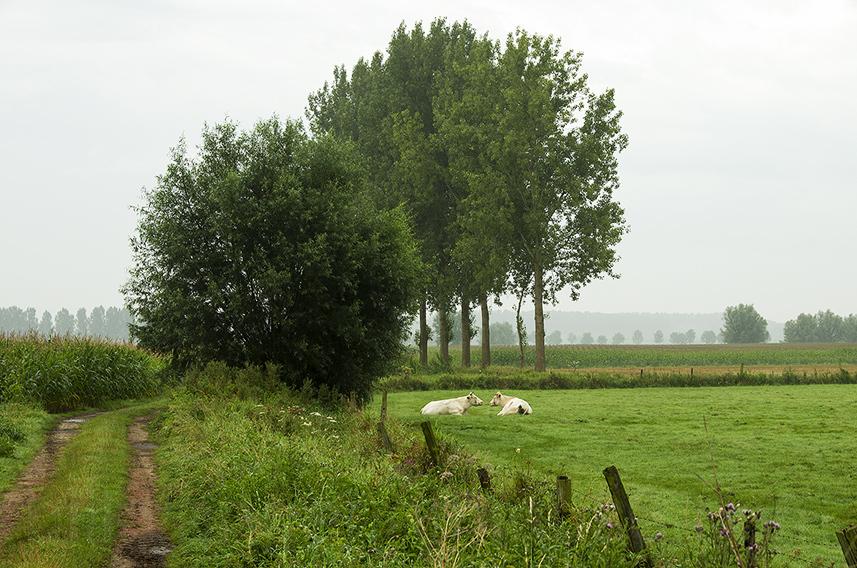 blikvanger966