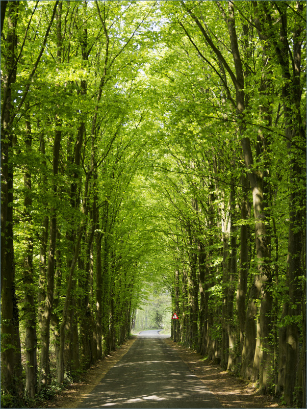 Limburgs lente laantje
