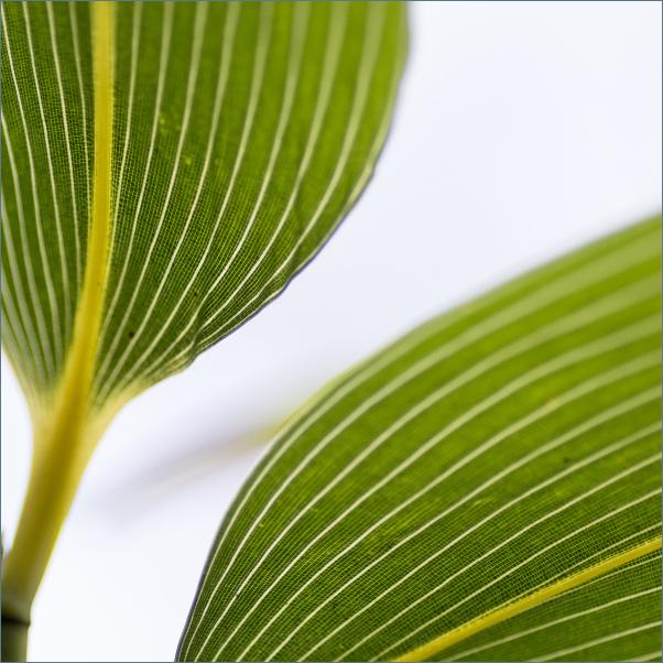 Bamboe blad