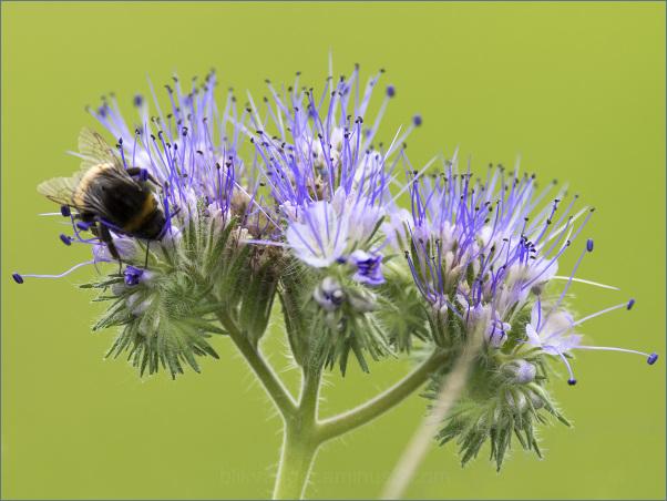 Van de bloemetjes en de bijtjes 1