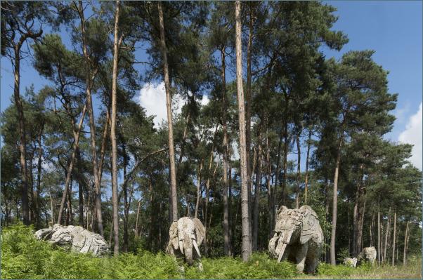 Da kommen die Elefanten!