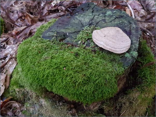 een schelp in het bos?