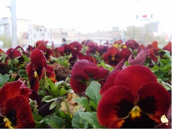 بهار در تهران