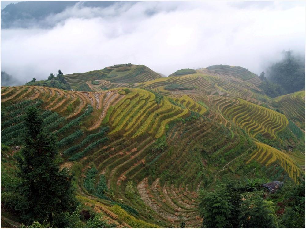 Chine, rizières en terrasse, Ping'An