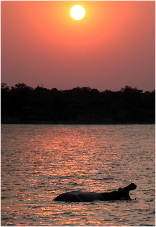 Animaux d'Afrique, couché de soleil sur le Zambèze