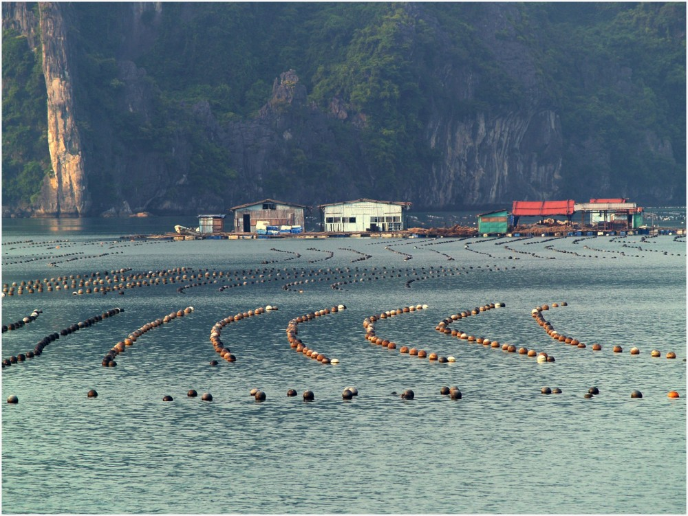 Maisons flottantes des pêcheurs en Baie d'Halong