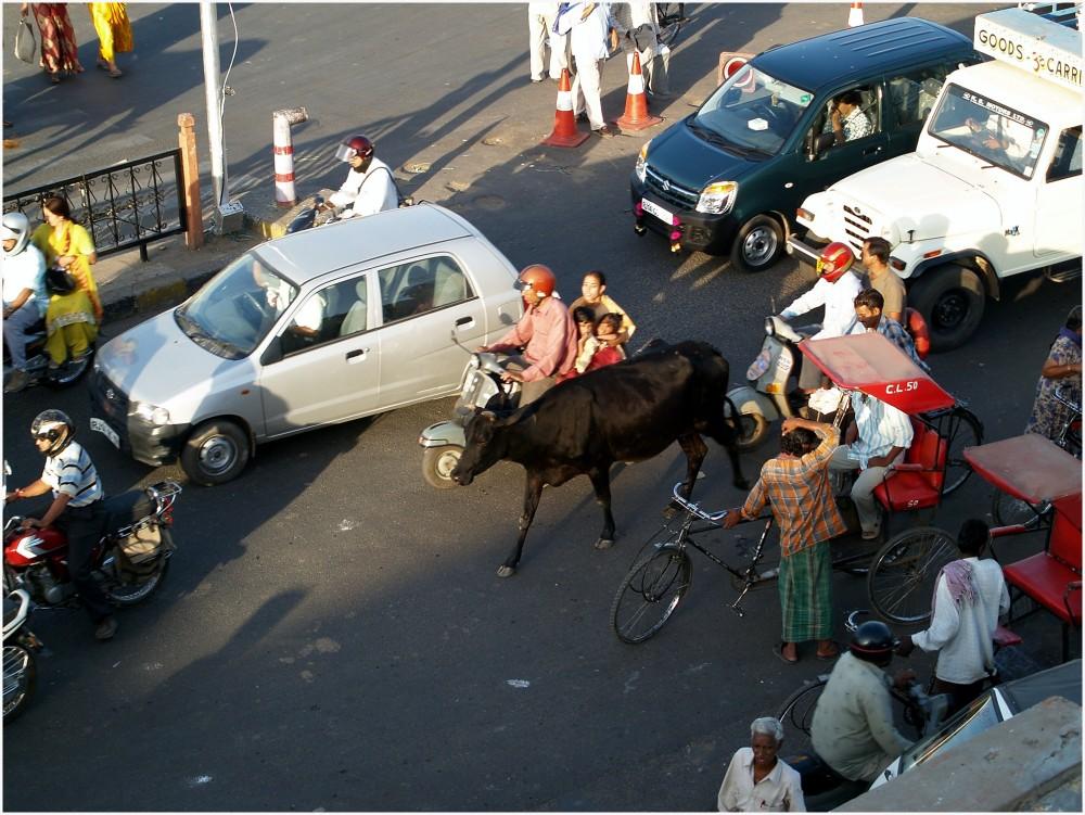 Vache au milieu de la circulation à Jaïpur, Inde