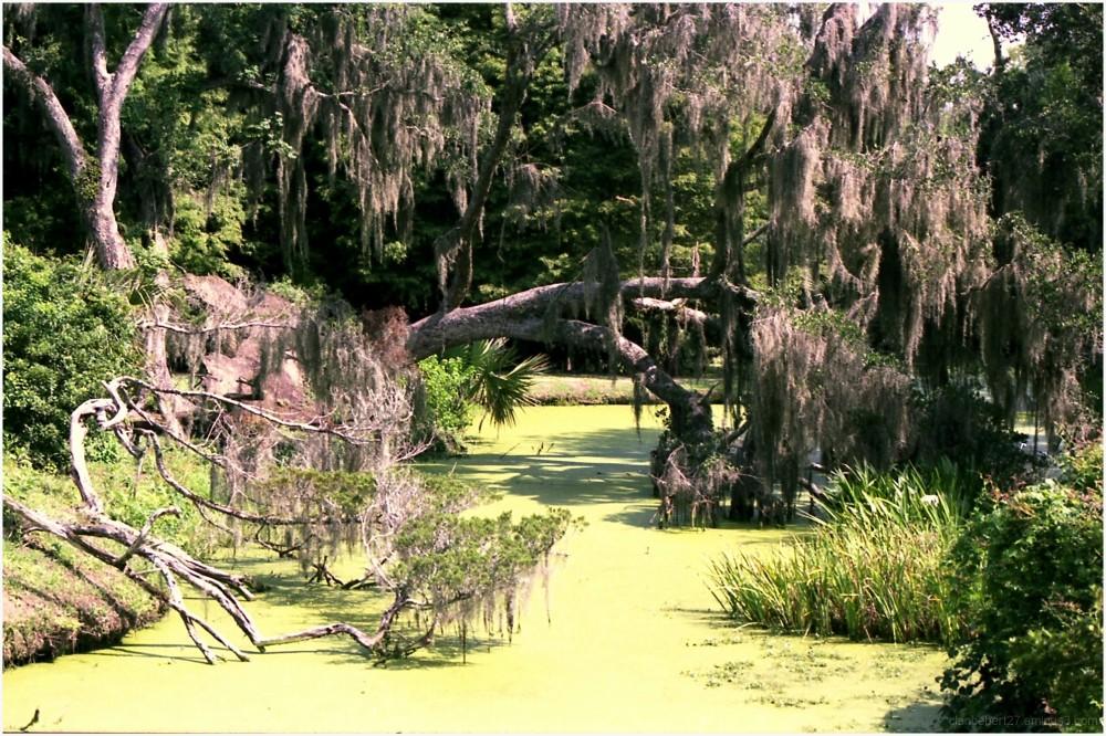 Avery Island en Louisiane, capital du tobasco