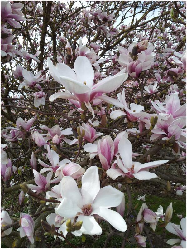 Image du printemps eh oui en Normandie!!