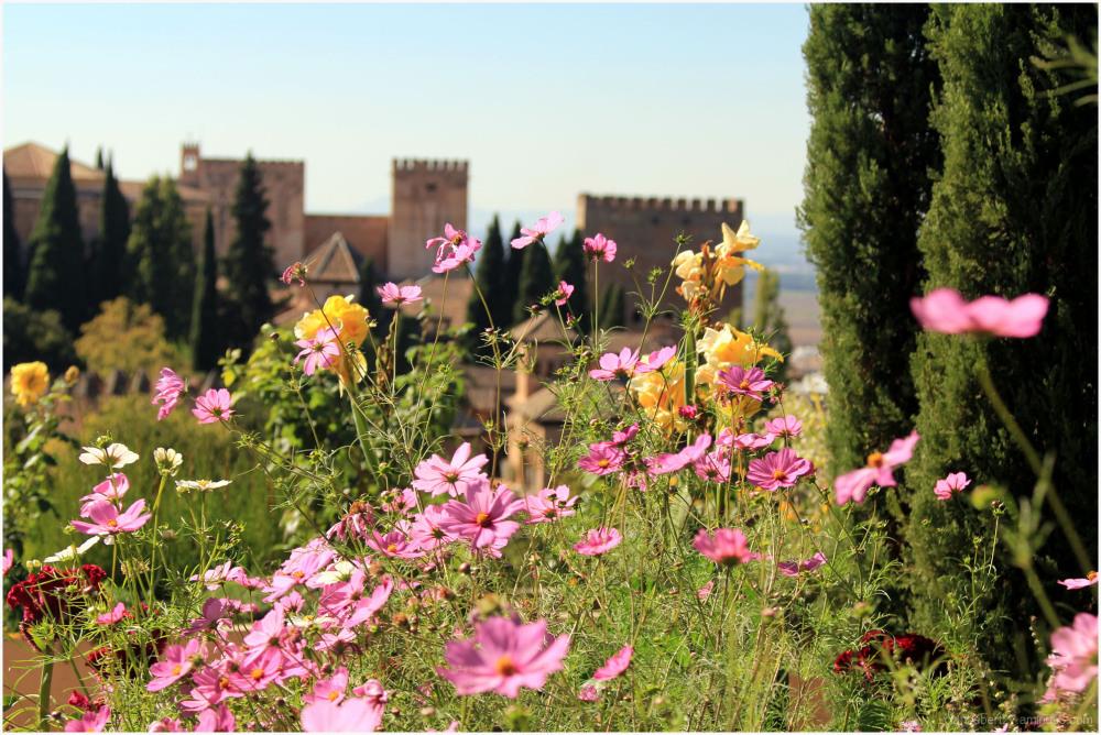 Jolies fleurs devant l'Alhambra de Grenade