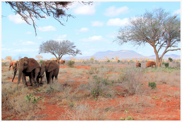 Eléphants dans une nature rude et colorée