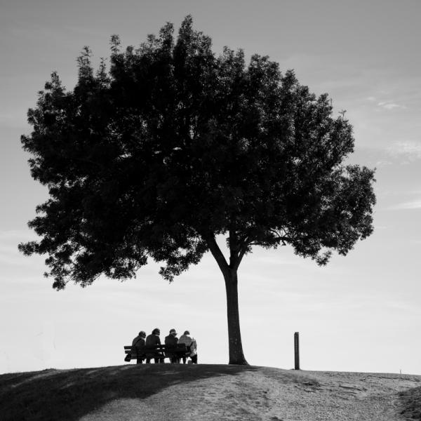 Sous mon arbre qu'il fait bon........