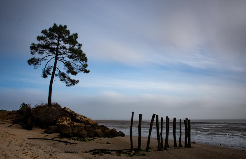 L'ile d'Oléron et ses arbres (1)