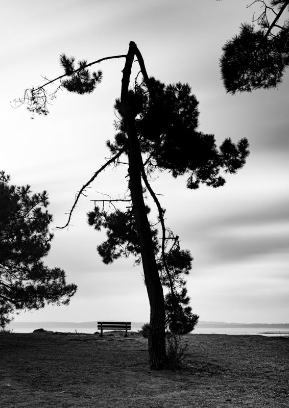 L'ile d'Oléron et ses arbres (2)