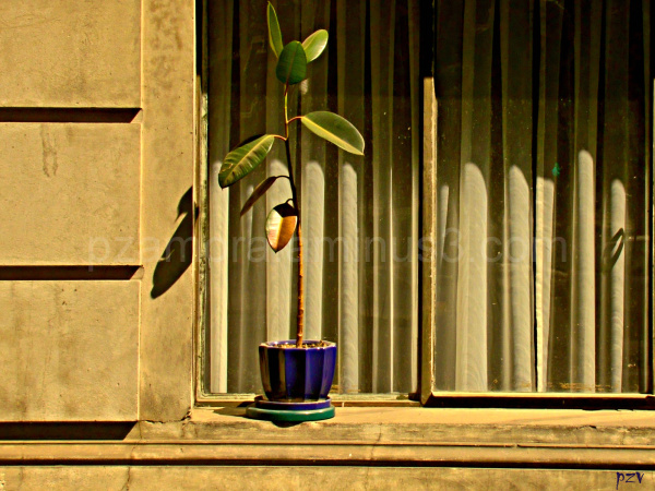 loneliness, plant