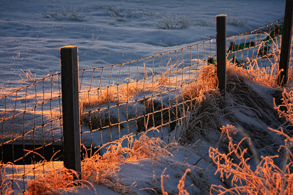 Fence With Frost