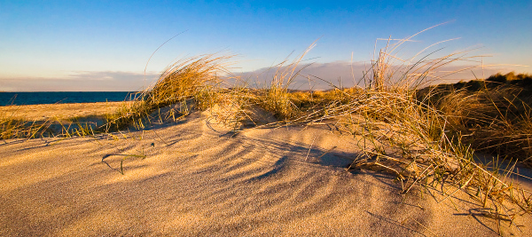 Tussocks in The Sand