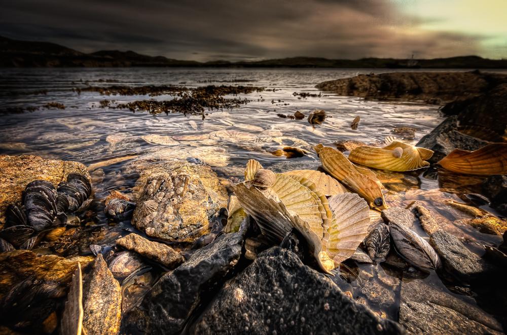 Shells From The Underworld
