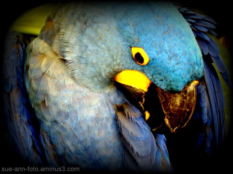 Le petit bleu   - The little blue