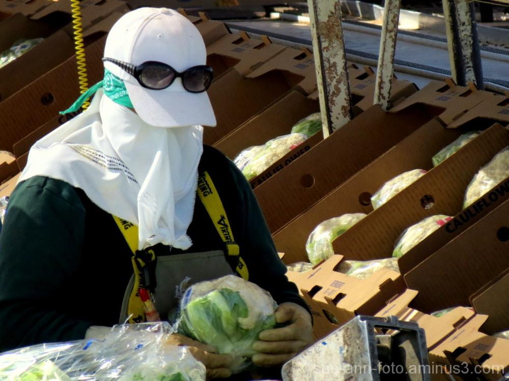 crop worker