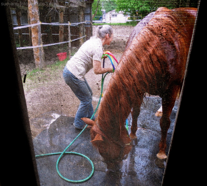 equitation dawson cheval