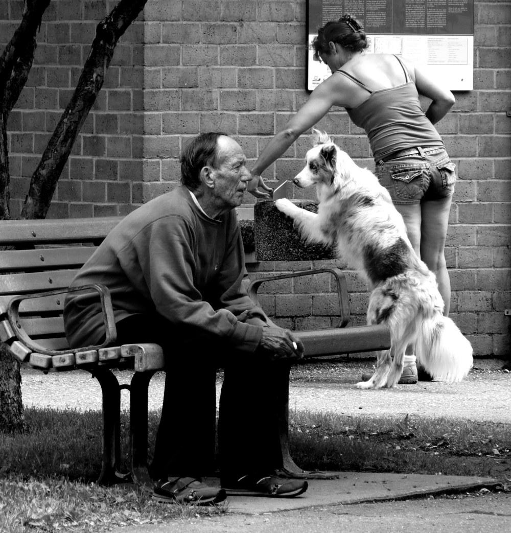 dog-drinking