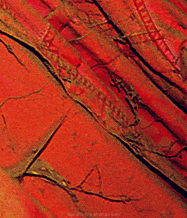 abstract red gold