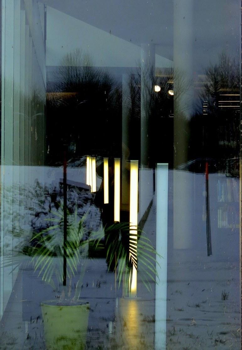 végétation sous lampe -  green under lamps