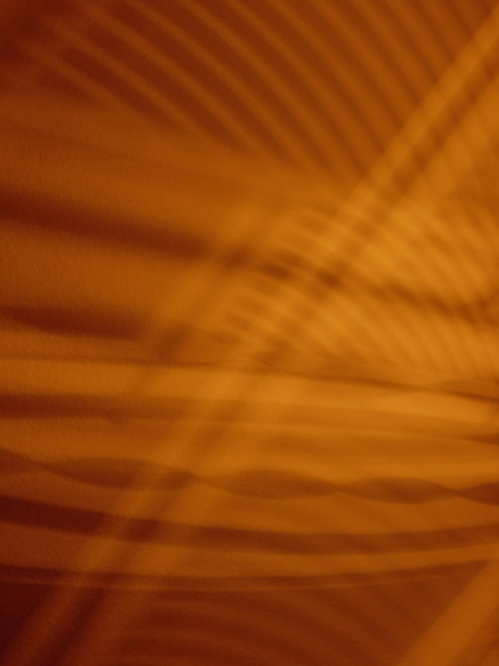 lignes dorées - golden lines