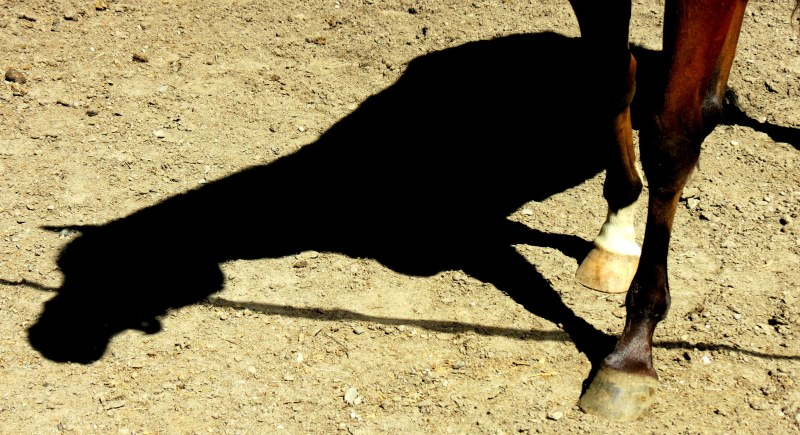 un cheval, une ombre  -  one horse, one shadow