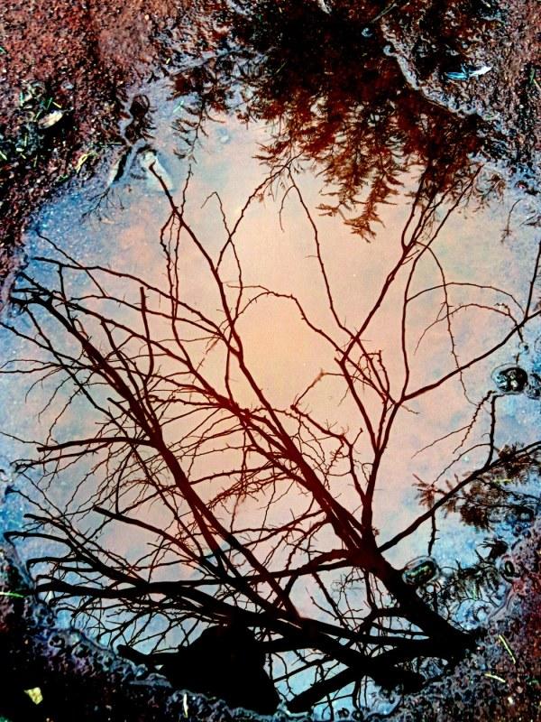 un arbre rose - the pink tree