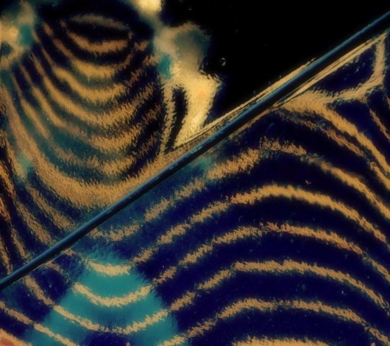 du tigre dans mon bolide - tiger in  my engine
